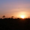 Sunset on the ghan