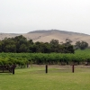 jacobs-creek-vineyards