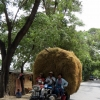 straw-cart-amarapura