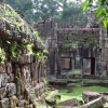 sunlight-and-ferns-angkor