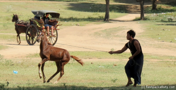 bagan-horse-cart-training