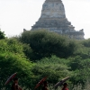 monks-with-parasols-bagan