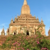 temple-and-flowers-bagan