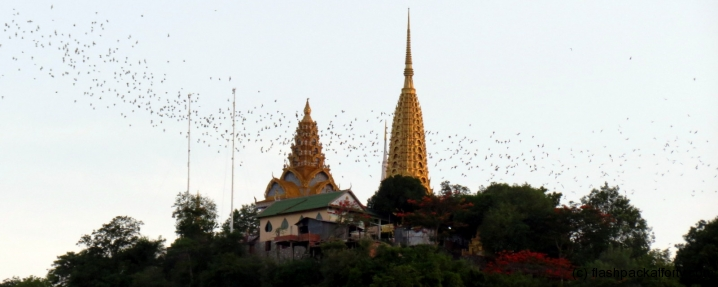 bats-fly-over-temple-phnom-sampeau