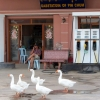 geese-filling-station-battambang