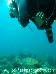 turtle-and-me-bohol-diving