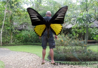 craig-with-butterfly-wings-bohol