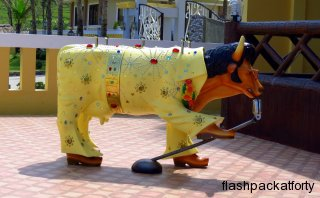 elvis-cow-at-blue-lagoon-hannahs-beach-resort