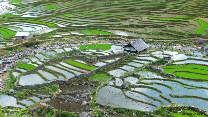 Sapa rice terrace