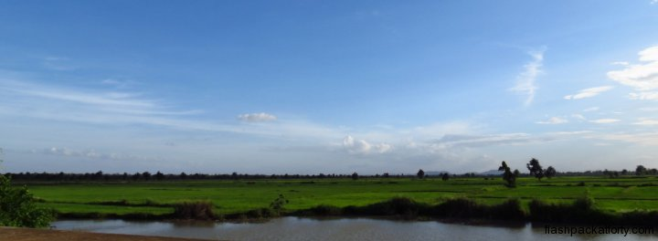 battambang-rice-paddy-view