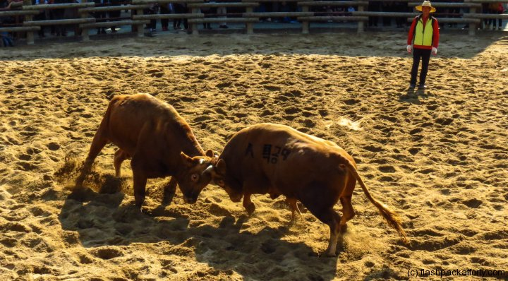 jinju-bulllring-match-in-progress-2012