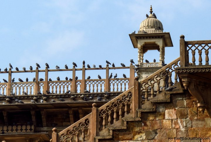pigeons-at-albert-museum-jaipur