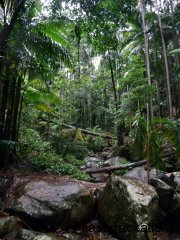 Mount Warning Rainforest Rocks