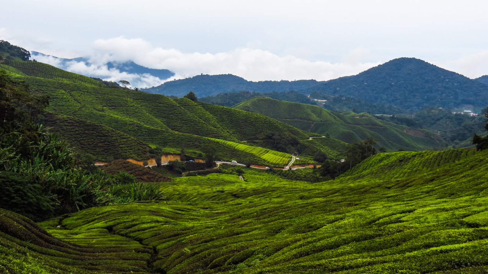 Cameron Highlands High In Malaysia Flashpacking Travel Blog
