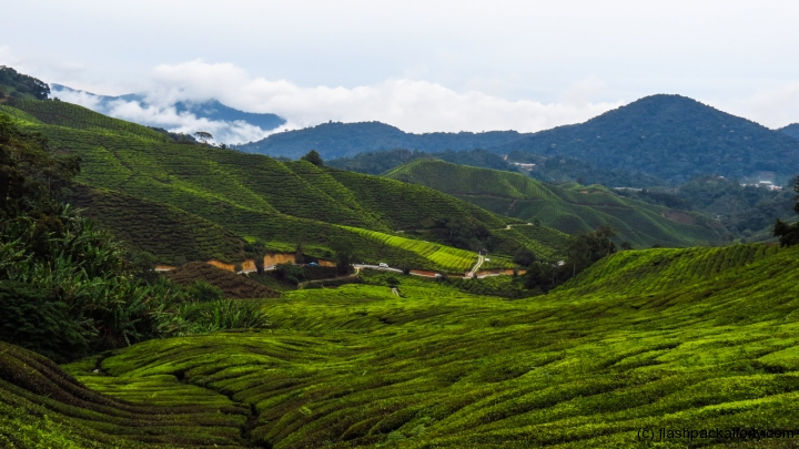 cameron-highlands-hills-and-tea