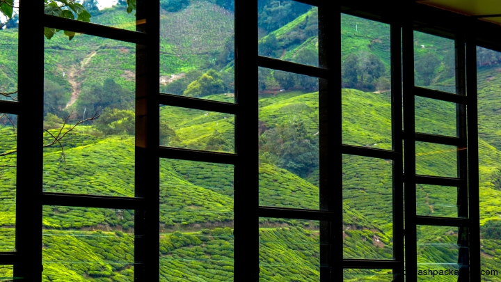 tea-plantations-through-window