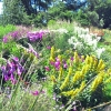 christchurch-herbaceous-border