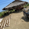 garlic-drying-ilocos-norte