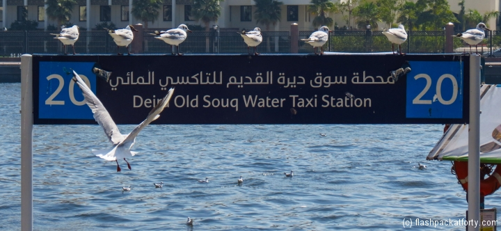 seagulls-and-water-taxi-station-dubai