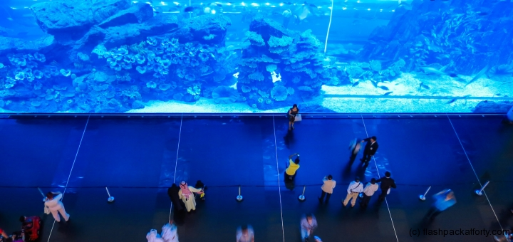 dubai-mall-aquarium-wall
