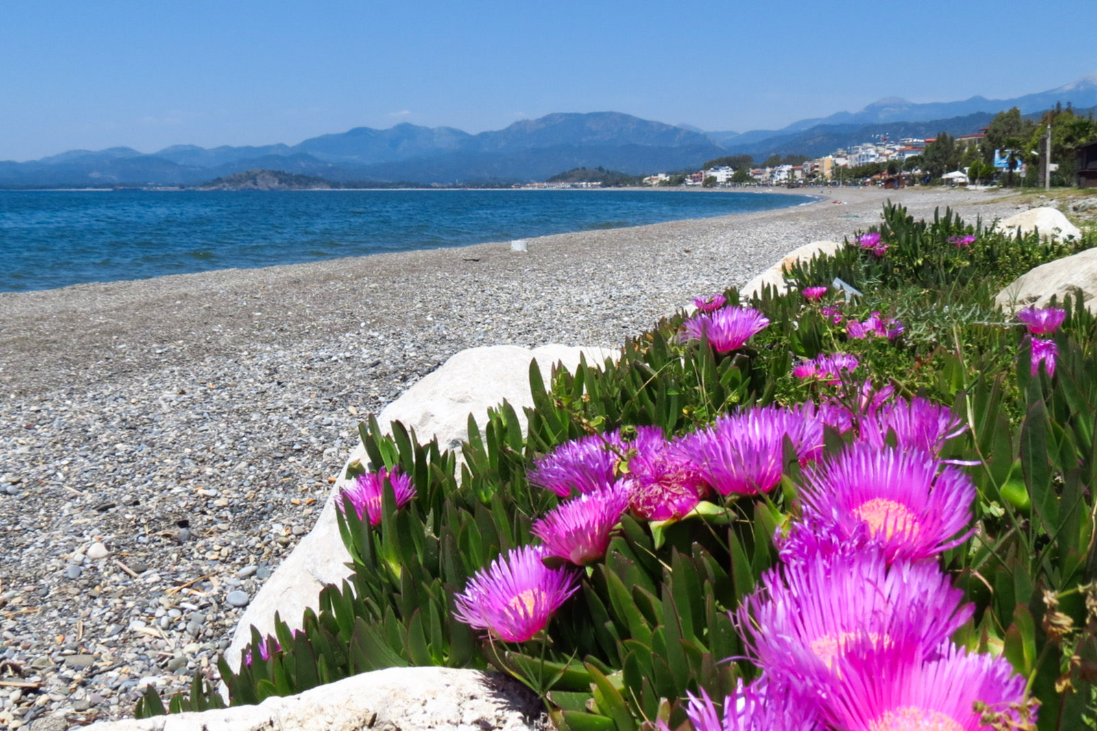 calis-beach-and-flowers