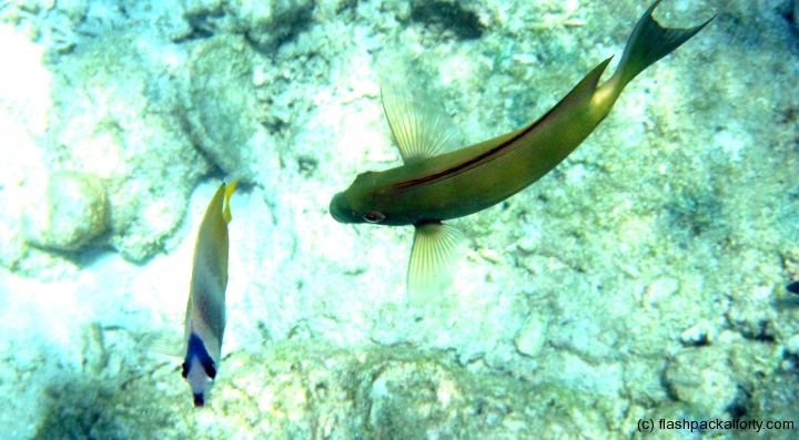fish-above-gili-air