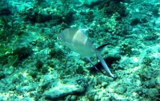 gili-air-fish-2