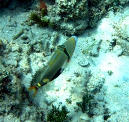 gili-air-snorkel-fish