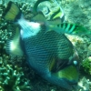 gili-air-fish-close-up