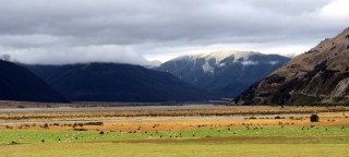 arthurs-pass-sheep-cow-view