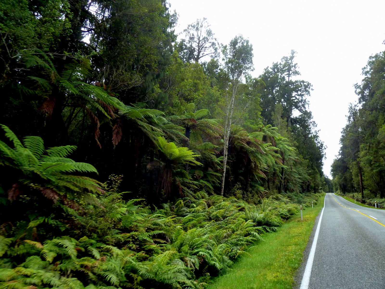 tree-ferns-and-fauna-road-to-glaciers