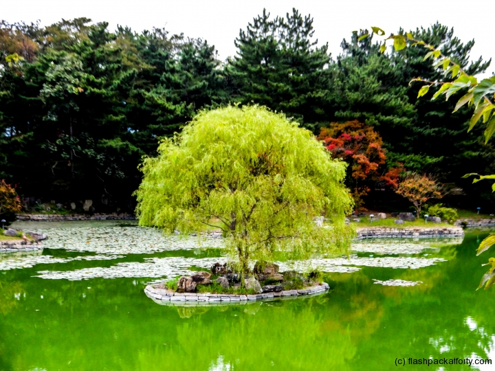 tree-on-anapji-pond