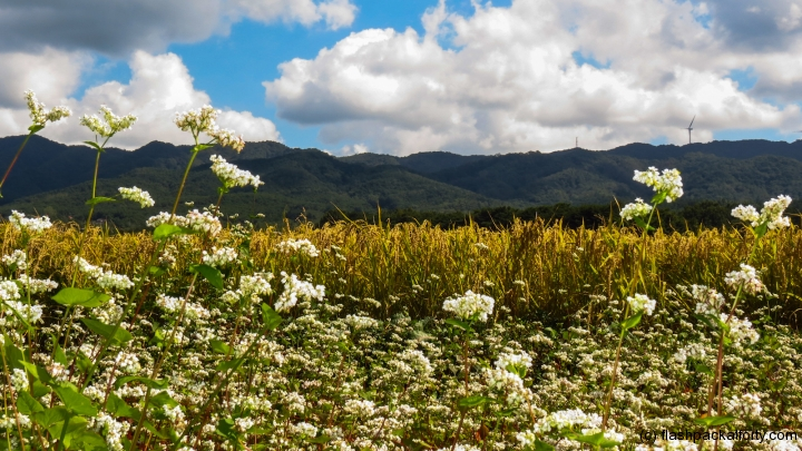 wild-flower-mountain-scene-gyeongju