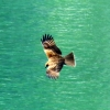sea eagle halong bay