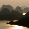 sunset dragonfly halong bay