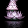 Lotus flower lanterns hue