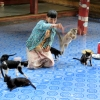cats-jump-at-nga-hpe-kyaung-monastery