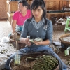 inle-lake-cheroot-manufacture