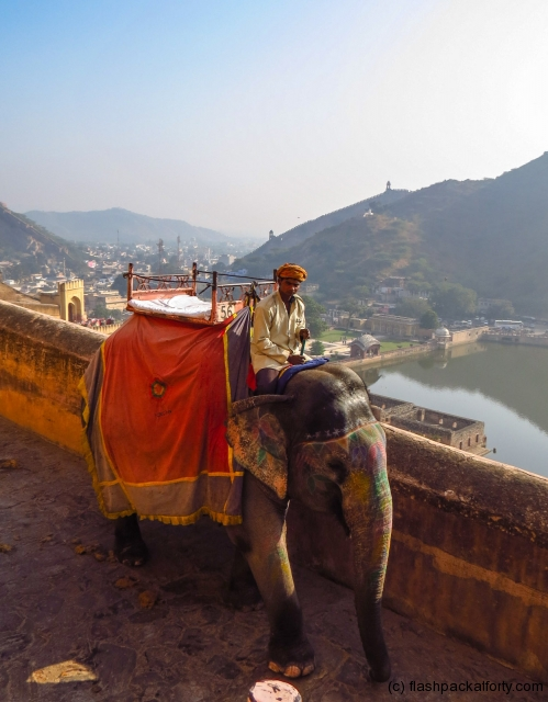 elephant-and-view-amber-for-jaipur