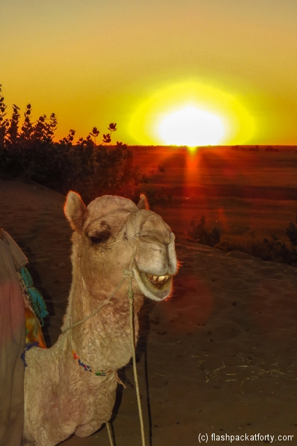 camel-and-sunset-jaisalmer-desert