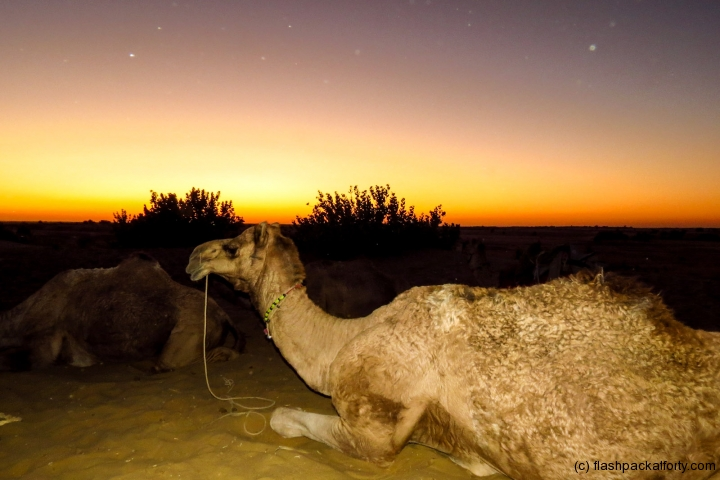 dusk-with-camel-in-jaisalmer-desert-india