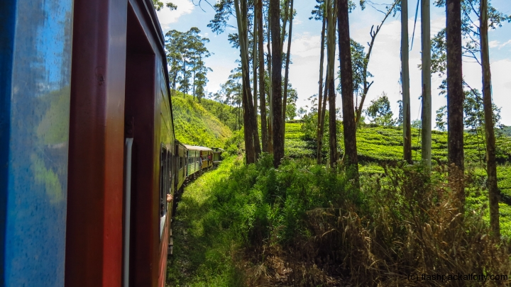 train-corner-through-forest-kandy-ella-train