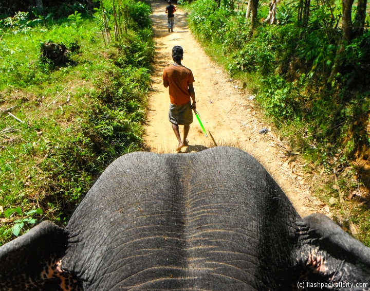 view-from-elephant-and-mahout-kandy