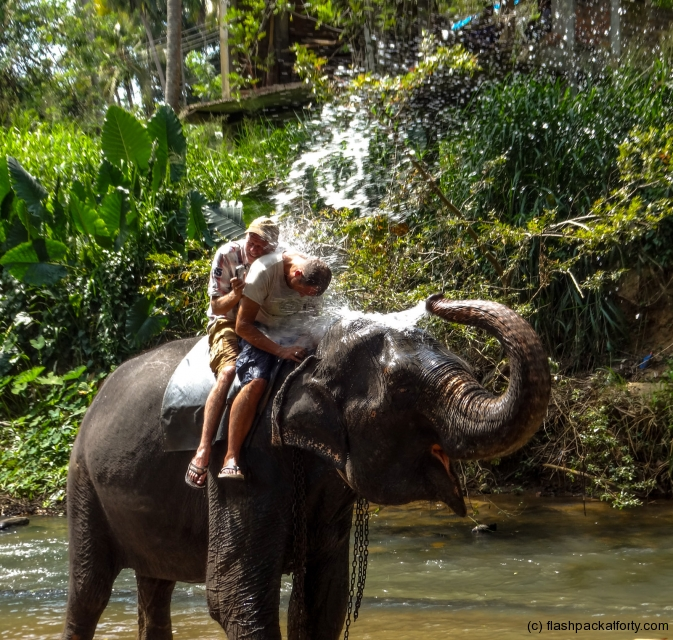 elephant-shower-kandy