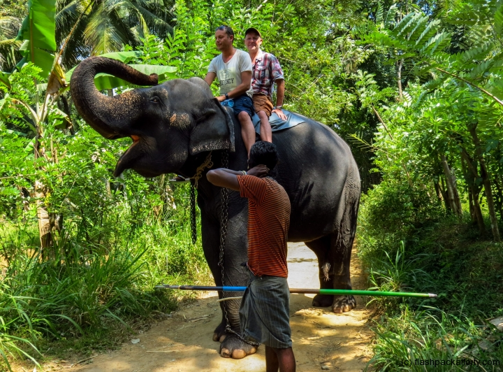 elephant-trunk-kandy-rides