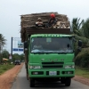 lory-transport-kep
