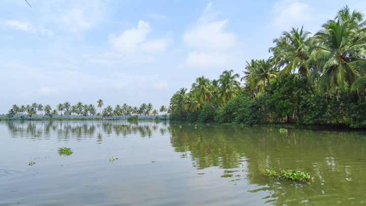kerala-backwaters-lake