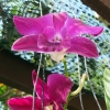 Orchid  Lanta Residence and Spa