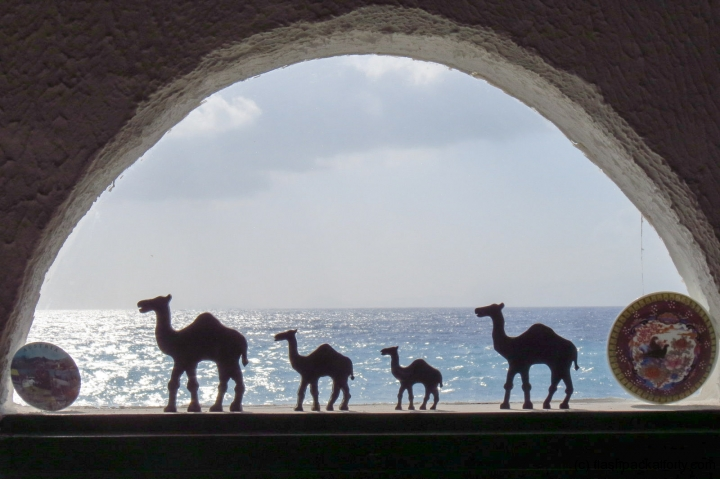 camels-in-window-kojak-pub-rhodes