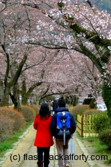 Philosophers path Blossom couple